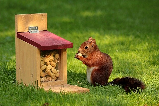 Squirrel away money for the future